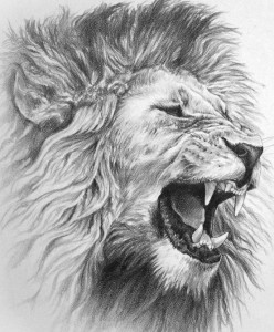 Roaring lion drawing